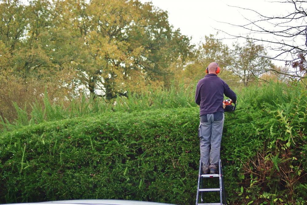 Entretien du jardin employer un jardinier en morbihan for Entretien jardin questembert